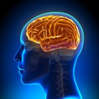 Memory/ Cognitive Health